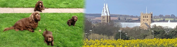 Four brown dogs and Southwell Minster